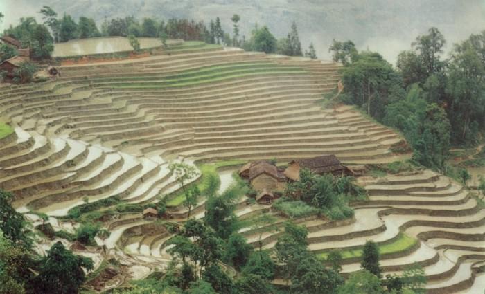 Aménagement de versants en terrasses, Vietnam